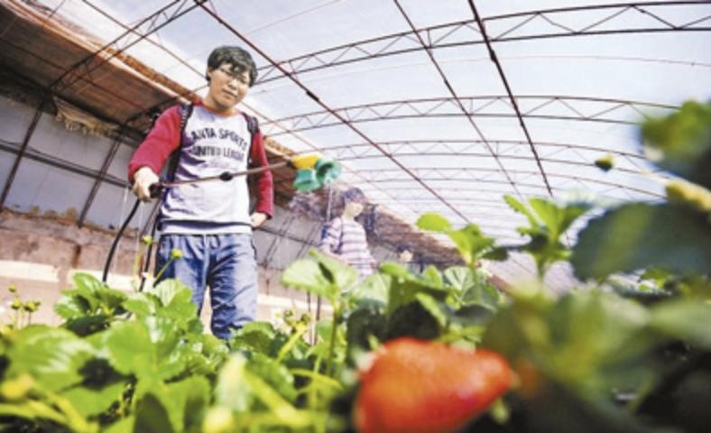 北京市将招聘508名高校毕业生到农村支农